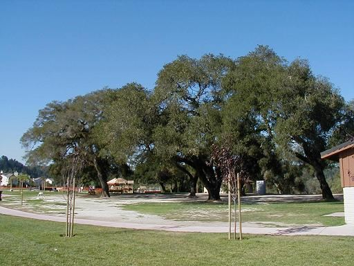 Oaks of the Skypark Area